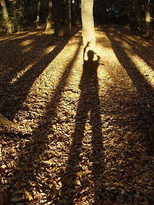 写真1:夕日で影が浮かび上がる